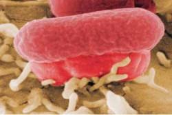 Il batterio killer fa paura: 18 morti, 2000 contagi. Scienziati nel pallone
