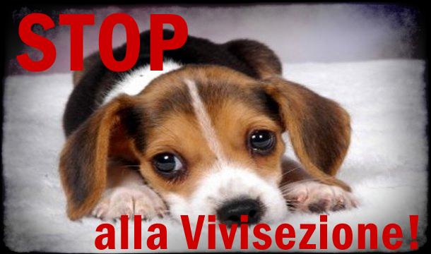 Risultati immagini per vivisezione